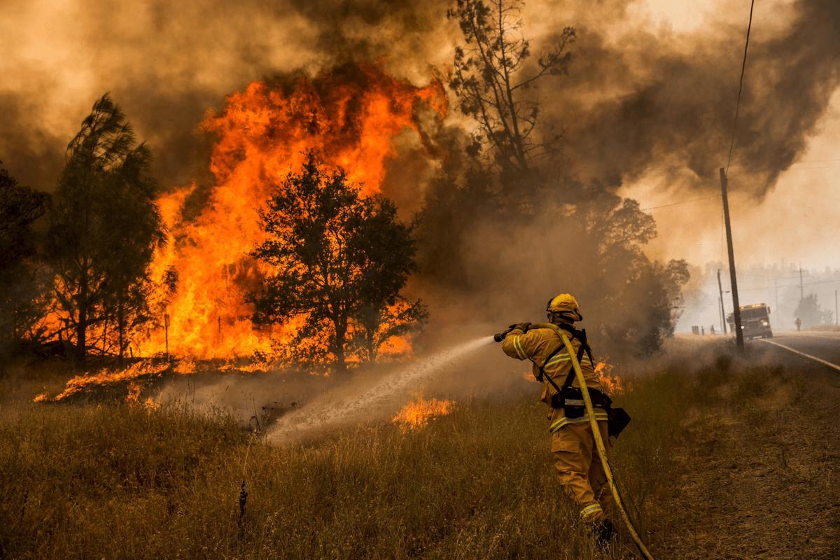 О причинах лесных пожаров