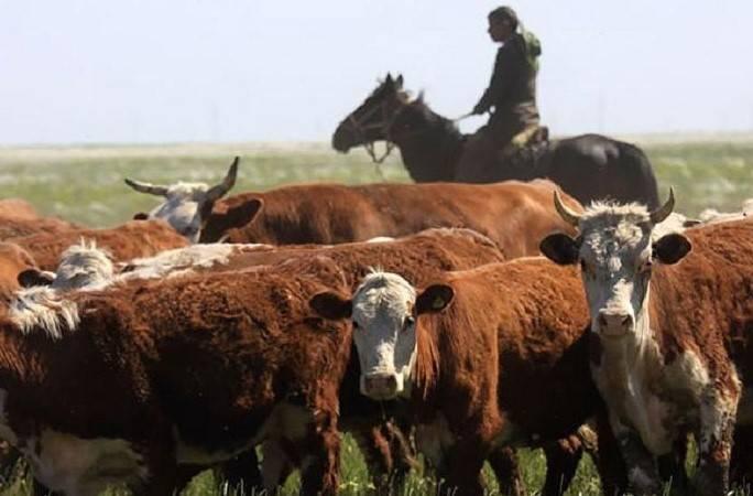 Сельхозпроизводство в Казахстане растет, но импортозависимость сохраняется